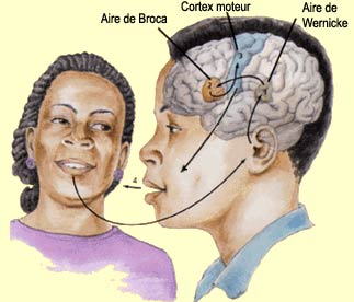 Langage et cerveau, nouvelle approche 1