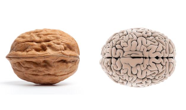 7 éléments nutritifs pour protéger votre cerveau contre le vieillissement 1