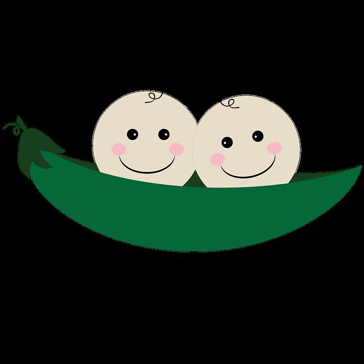 Découverte des gènes qui influencent la grossesse gémellaire et la fertilité 1