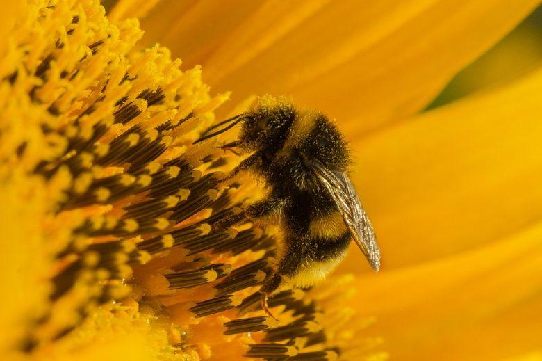 allergie au pollen et rhume des foins