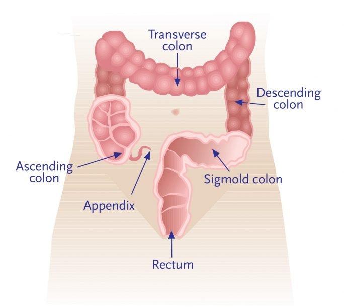 quest-ce-que-le-rectum-anatomie-et-role