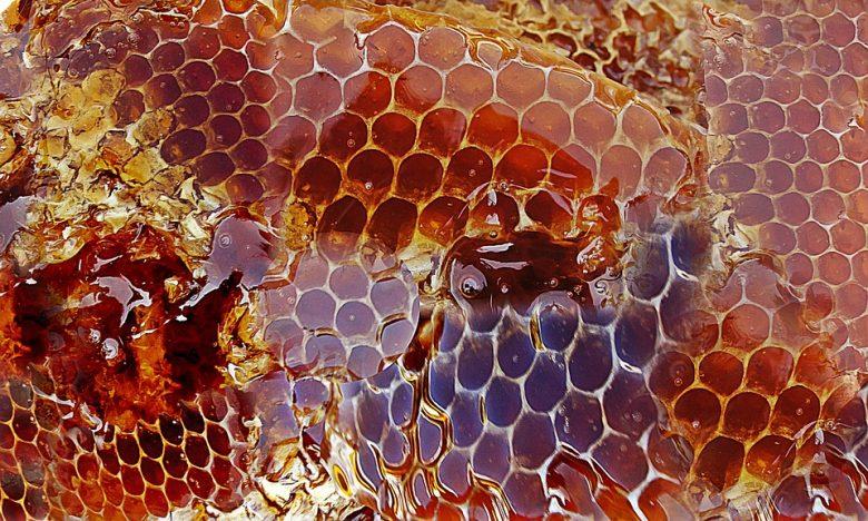 Le miel de manuka : Bienfaits santé et caractéristiques 2