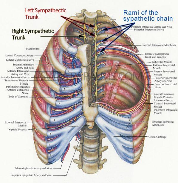 quest-ce-quune-sympathectomie