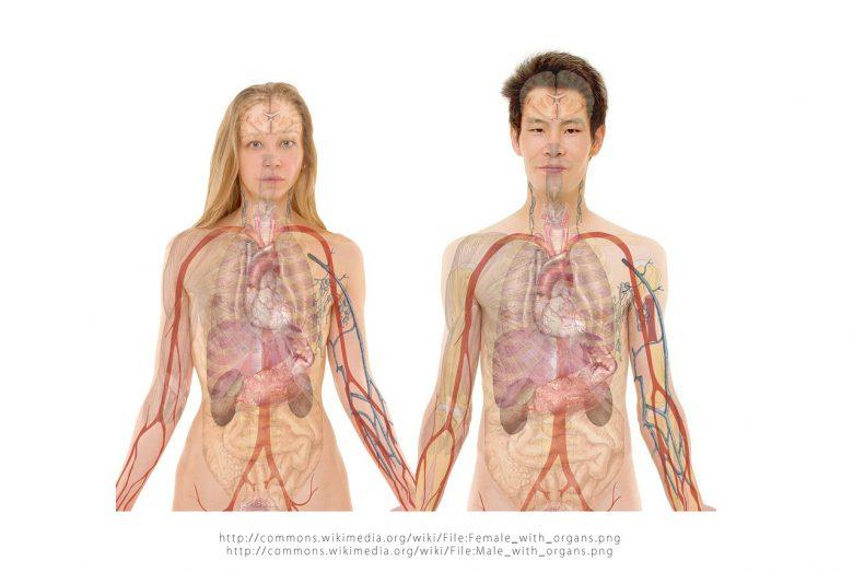 Première implantation d'un rein artificiel : essais en 2017 1