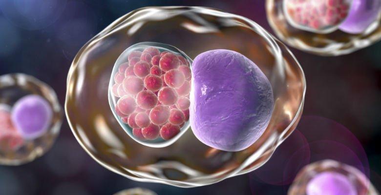 Chlamydia : Causes symptomes, prévention et traitement 1