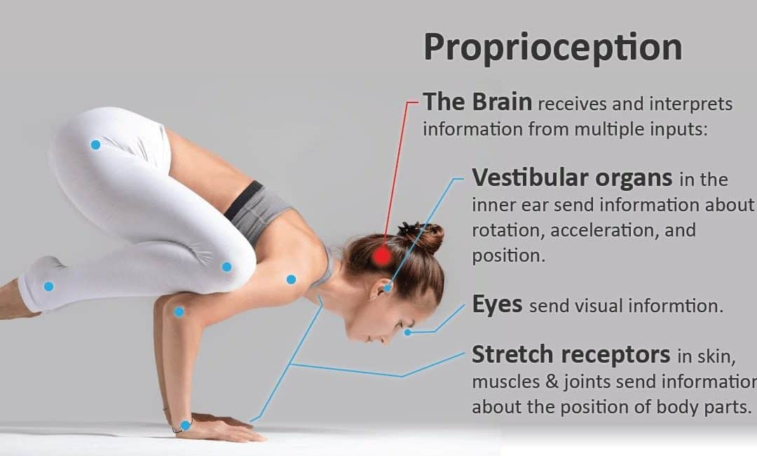 Proprioception - Comment rendre votre corps plus intelligent 2