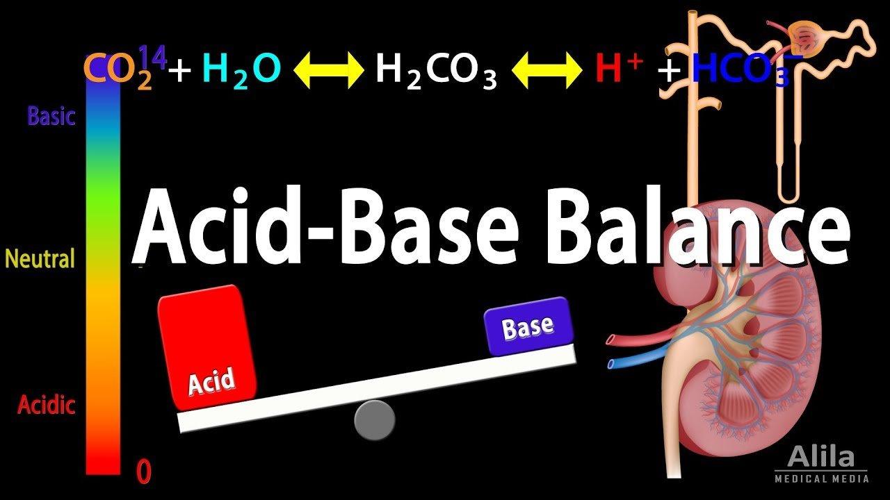 L'équilibre acido-basique : aliments alcalinisants et aliments acidifiants