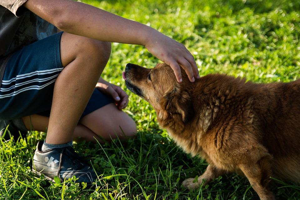 Peur des chiens : cynophobie, comment vaincre la phobie des chiens