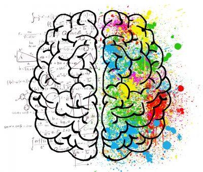 Développer les capacités de son cerveau : hémisphère gauche et droit