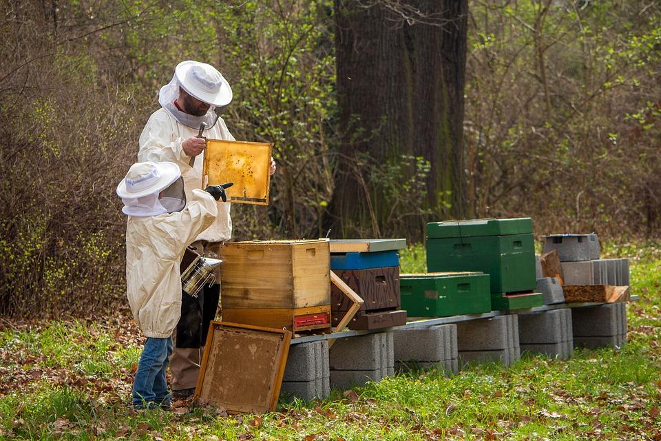 Miel, gelée royale et propolis: la beauté de la nature 1