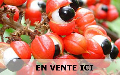 Le guarana : infos, vertus médicinales et utilisations