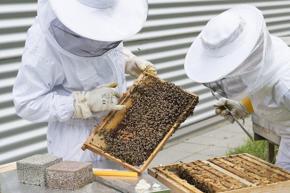 Miel, propolis, gelée royale : les bienfaits santé de la ruche