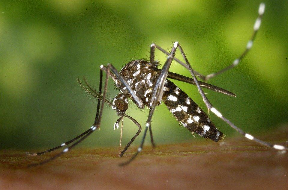 Le chikungunya: un virus tropical
