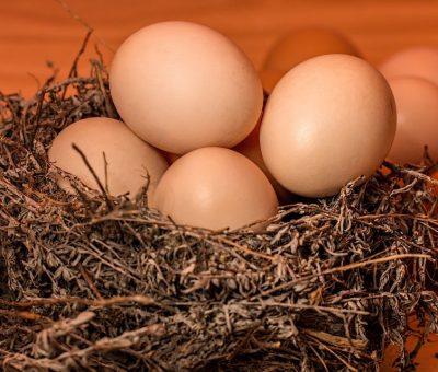 L'œuf, réhabilitation d'un aliment décrié